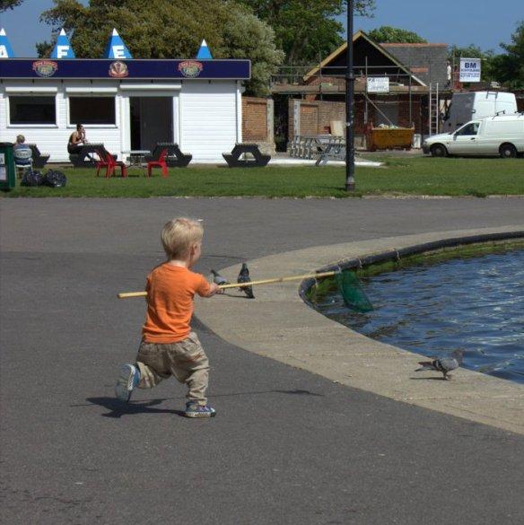Catch the pigeon!